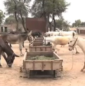 Donkey Farming in KPK to Raise Exports
