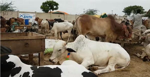No tax on purchasing sacrificial animals