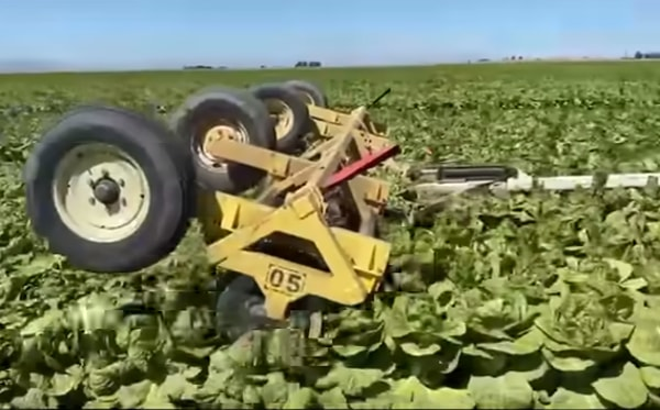 Corona's effects on farms and fields