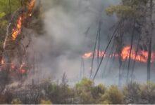Fire in southern coast in Turkey